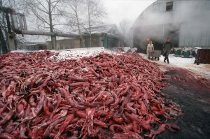 ...considering the pile of dead, skinned animals left behind, still think fur is glamorous?
