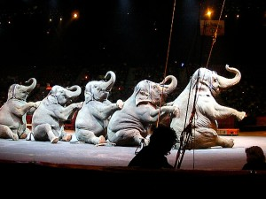 Elephants at a Ringbling Bros. Circus, 2008.  © Hassan Abdel-Rahman/Creative Commons