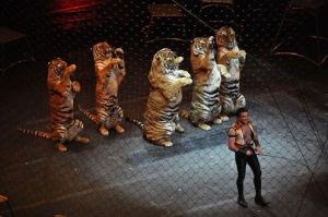 640px-Ringling_brothers_over_the_top_tiger