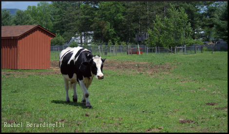 The Importance of Farm Sanctuaries#BTC4A