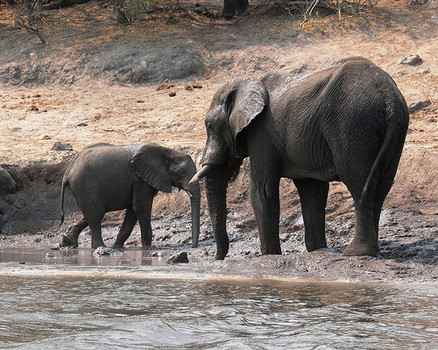 IMAGE: A baby elephant and their mother hang out together near a body of water. Flickr creative commons
