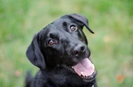 dog-flickr-m01229
