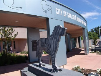 San Jose Animal Shelter by Joey Rozier. Creative Commons: https://www.flickr.com/photos/mrjoro/14047845/